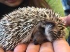 Harry Hedgehog Cafe in Roppongi